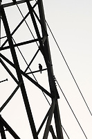 A bird sits among powerlines in HUDA City Centre in Gurugram, Haryana, on Mon., December 10, 2018.