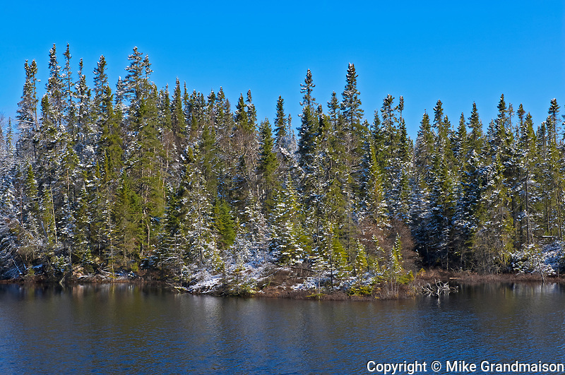 Light snow on boeral forest <br />