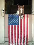 Day 3 of the 78th Amador County Fair, Plymouth, Calif.<br /> <br /> Horse with USA flag