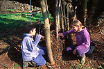A082R1 Children playing at making den in woods-making a wattle and daub wall