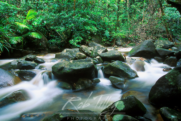 Rainforest, Daintree NP, Queensland, Australia