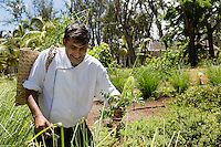 France, île de la Réunion, Saint Paul,  restaurant le Choka Bleu  Le chef  Christian Virassamy-Mac   //  France, Ile de la Reunion (French overseas department), Saint Paul,  restaurant le Choka Bleu ,  the chief Christian Virassamy-Macé  in the herbs garden