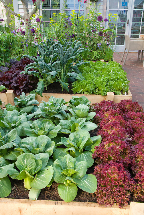 Landscaping With Vegetables : Raised beds vegetable garden on patio plant flower