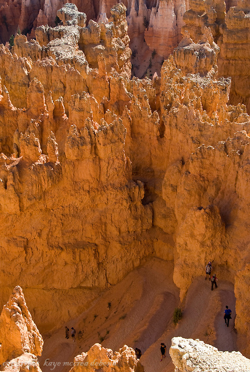 Bryce National Park Landscape - Navajo Loop Trail switchbacks among the hoodoos.