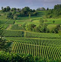 France, Aquitaine, St. Emilion: Vineyard | Frankreich, Aquitanien, St. Emilion: Weinberge