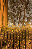 THIS IMAGE IS AVAILABLE EXCLUSIVELY FROM CORBIS.<br />