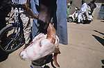 Goats head, a local speciality, when cooked with hot peppers herbs and spices, is carried through the streets of Kano..The implementation of Islamic Sharia Law across the twelve northern states of Nigeria, centres upon Kano, the largest Muslim Husa city, under the feudal, political and economic rule of the Emir of Kano. Islamic Sharia Law is enforced by official state apparatus including military and police, Islamic schools and education, plus various volunteer Militia groups supported financially and politically by the Emir and other business and political bodies. Fanatical Islamic Sharia religious traditions  are enforced by the Hispah Sharia police. Deliquancy is controlled by the Vigilantes volunteer Militia. Activities such as Animist Pagan Voodoo ceremonies, playing music, drinking and gambling, normally outlawed under Sharia law exist as many parts of the rural and urban areas are controlled by local Mafia, ghetto gangs and rural hunters. The fight for control is never ending between the Emir, government forces, the Mafia and independent militias and gangs. This is fueled by rising petrol costs, and that 70% of the population live below the poverty line. Kano, Kano State, Northern Nigeria, Africa
