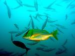 costa rica :: underwater (2008)