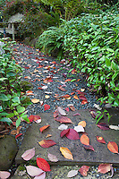 Autumn leaves from Dogwood tree on gravel path with stone pavers  Edelson Garden