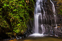 Cucharillos Waterfall in the Mashpi Cloud Forest area of the Choco Rainforest, Ecuador