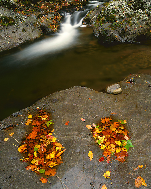 Fall scene along the Middle Prong of the Little River; Great Smoky Mountains National Park, TN