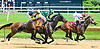 Belgian winning at Delaware Park on 6/2417