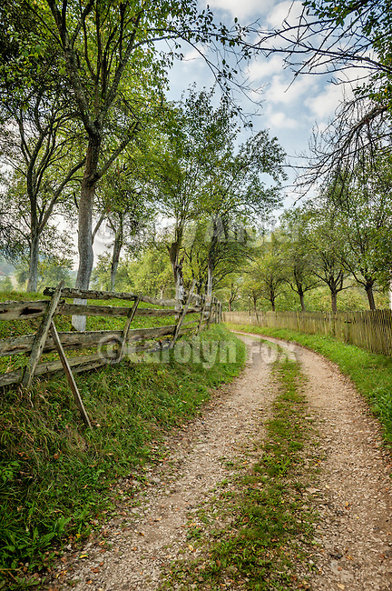 Fence lined country road with trees, Mokra Gora, Serbia