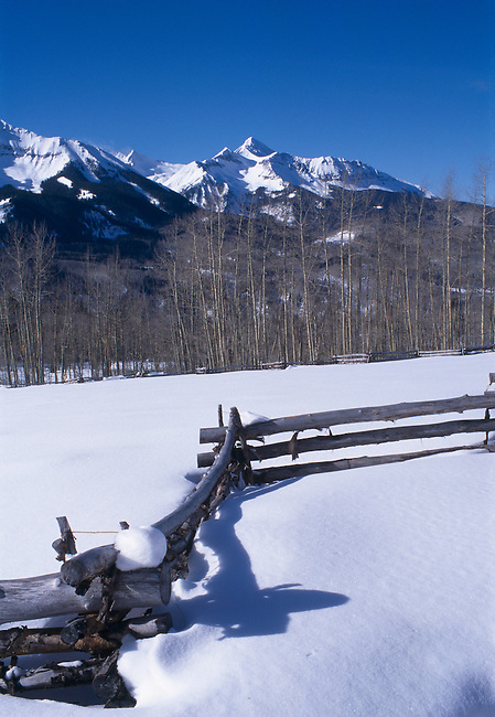Aspen fence along a snowy field, Skyline Ranch, San Miguel Mtns, Telluride, CO
