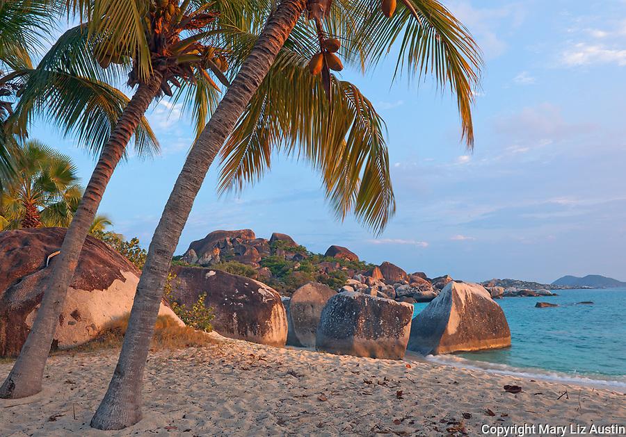 Virgin Gorda, British Virgin Islands, Caribbean <br /> Palm trees lean out towards the beach on Spring Bay at sunset, Spring Bay National Park