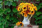 Carl, FLOWERS, photos, SWLA12021,#f# Blumen, Natur, flores, naturaleza