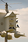 Lysock View Complex, 542 County Farm Rd. Purple Martin birdhouse.