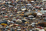 A threatened Snowy Plover blends in with the rocks on this California shore.