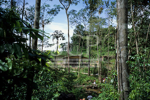 Puraquequara, Amazon, Brazil. Well-built rural settler's house in bright sunshine.