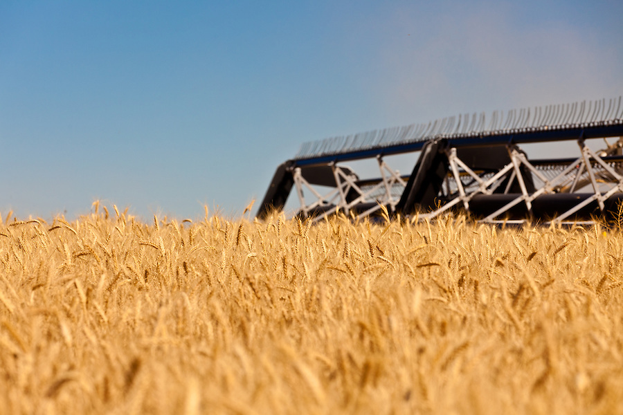 A Case 8120 combine harvests wheat in the Palouse of Eastern Washington State.