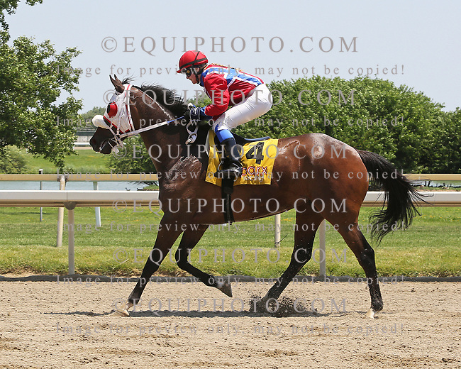 Voices Only #3 with Nora Holm riding won the $30,000 Longines Fegentri Championship for Ladies Race at Parx Racing in Bensalem, PA on June 10, 2017. Photo By Taylor Ejdys/EQUI-PHOTO