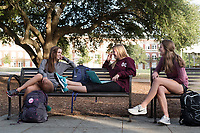 Friends chatting on Drill Field bench: Chemical Engineering majors Nicole Lejeune (grey), Natalie King (maroon MSU), and Lauren Brown (maroon).<br />  (photo by Megan Bean / &copy; Mississippi State University)