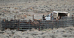 A group of mares and foals are unloaded into a temporary corral at the east end of Dayton Valley Road after being gathered last week by BLM officials. After the mares received a fertility-control vaccine, 43 wild horses were released Tuesday, Nov. 30, 2010, in Dayton Valley, Nev. .Photo by Cathleen Allison