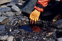 Remaining crude oil from the Exxon Valdez Oil spill trapped under rocks on a beach four years after the spill, 1992. Seal Island, Prince William Sound, Alaska