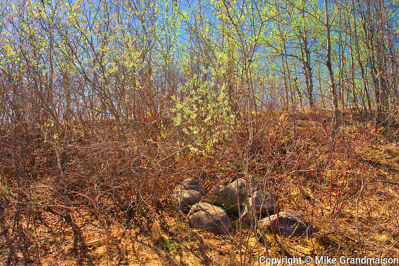Spring in LIttle Mountain Park<br />Winnipeg<br />Manitoba<br />Canada