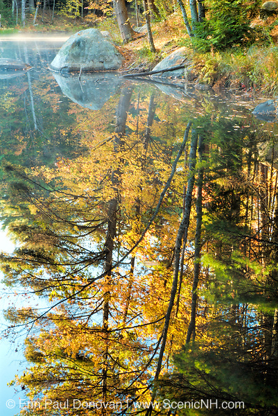 Reflections of autumn in a small pond
