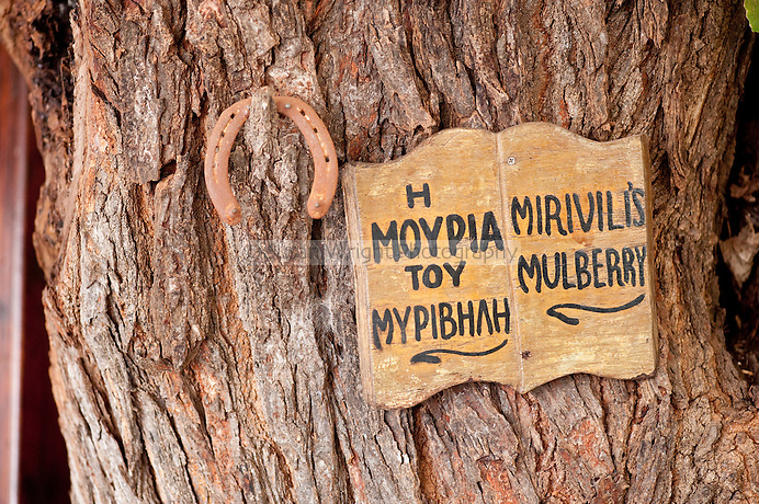 Myrivili's Mulberry Tavern in Skala Skamnias, Lesbos Island, Greece