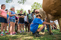 Fun with Food Summer Camp participants watch Robert Cunningham of Starkville as he milks a cow under the direction of Kenneth Graves, a dairy herder for Mississippi State's Department of Animal and Dairy Sciences. Fun with Food camp is sponsored by MSU's Department of Food Science, Nutrition and Health Promotion, and the College of Agriculture and Life Sciences, as well as Kroger. Held each summer, it provides an opportunity for children to be involved with food from farm to table by experiencing food production, processing and preparation. Creativity, math, science, reading and writing are among the skills children develop through their participation in the camp.<br />