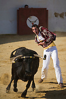 Europe/France/Aquitaine/40/Landes/ Vielle-Tursan: Ecarteur lors de la course landaise organisée pour la fête du village //  France, Landes, Vielle Tursan, ecarteur performer during a bullfight at the Fete du Village Festival