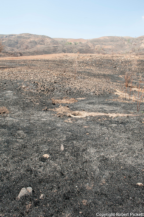 Slash and burn method of agriculture, to clear field for farming, Southern Madagascar. Method of farming where new forest is cut down to make way for farmland.