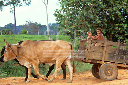 Acre State, Amazon, Brazil. Two boys driving an ox cart on a dirt road.