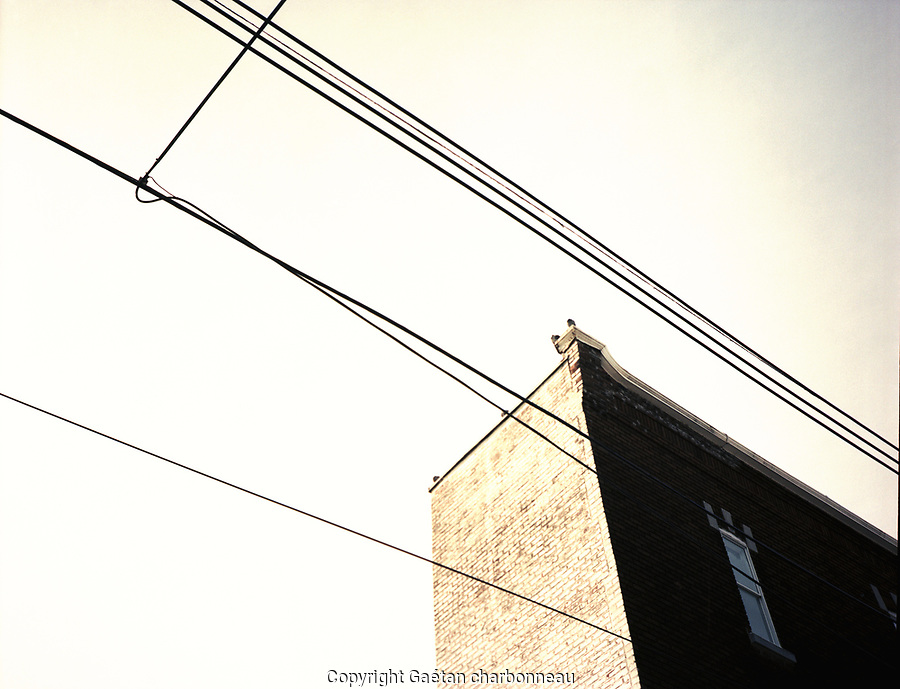 Diagonal electrical wires and building