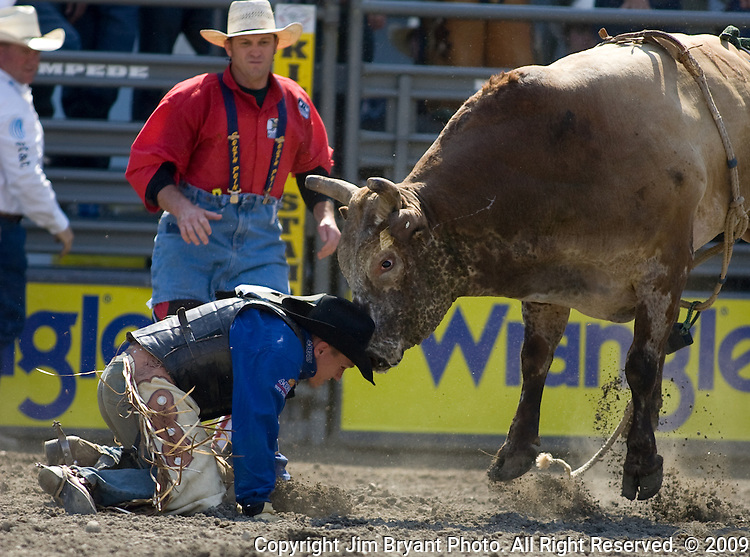 John Jacobs, from Timber Lake, S.D. gets head butted by Cowboy Caviar during the Xtreme Bull Riding Competition at the Kitsap County Fair and Stampede  held Aug. 26 to Aug. 30, 2009 in Silverdale, WA. Jim Bryant Photo. All Right Reserved. © 2009