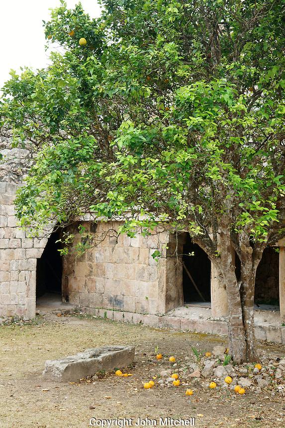 Orange tree at the Mayan ruins of  Kabah, Yucatan, Mexico