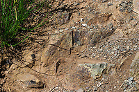Spilite soil. Domaine Jo Pithon, Anjou, Loire, France