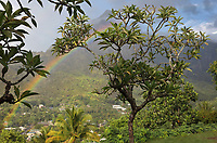 View across the valley with a rainbow, from the Calvary Cemetery near Atuona, where the French artist Paul Gauguin, 1848-1903, and the Belgian singer Jacques Brel, 1929-78, are buried, on the island of Hiva Oa, in the Marquesas Islands, French Polynesia. Picture by Manuel Cohen