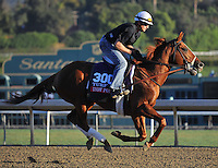 Indy Point, trained by Richard Mandella, trains for the Breeders' Cup Turf at Santa Anita Park in Arcadia, California on October 30, 2013.