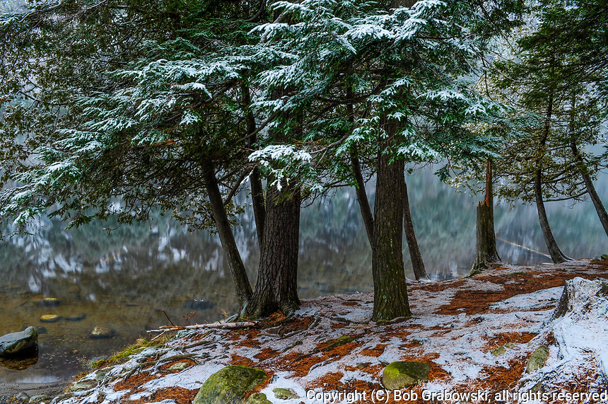 Eastern Hemlocks along the shore of Chapel Pond in the Adirondack Mountains Of New York State