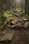 Hiking trail in Cathedral Woods, Monhegan Island, Maine, USA