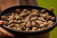 A manteiga de murumuru é uma gordura in natura, rica em ácidos láurico, mirístico e oléico. O fruto contém uma gordura branca, inodora e sem gosto especial com a vantagem de não rançar facilmente, pois é rica em ácidos graxos saturados de cadeia curta como os ácidos láurico e mirístico. A qualidade desta gordura, não é muito diferente da gordura da amêndoa do tucumã, do dendê e do côco, porém ela tem a vantagem de apresentar maior consistência por causa de seu ponto de fusão (32,5ºC), que é superior á do dendê (25ºC) e do côco (22,7ºC). A qualidade desse óleo possibilita a mistura com outras gorduras vegetais que derretem a temperatura mais baixa. Ela pode também entrar no preparo de um substituto parcial da manteiga de cacau, na fabricação do chocolate proporcionando ao chocolate uma consistência mais firme em locais com temperatura mais elevada.<br /> <br /> A gordura do murumuru tem a grande vantagem de possuir baixa acidez (4 a 5 %), especialmente quando preparada com amêndoas frescas, o que diminui os custos de refinamento.<br /> O uso do óleo de murumuru traz inúmeras vantagens para a pele e os cabelos. A manteiga de murumuru é altamente nutritiva, emoliente e hidratante ao cabelo e possibilita a recuperação da umidade e elasticidade natural da pele. A manteiga do murumuru é utilizada em pequenas proporções em xampus (0,5% até 1%) e em formulações de condicionadores, cremes e loções hidratantes, sabonetes, batons e desodorantes (0,5% até 8%).<br /> Pará Brasil<br /> Foto Paulo Santos<br /> 22/06/2010