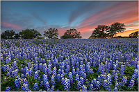 Please visit www.ImagesfromTexas.com for updated bluebonnet and wildflower images. This website hasn't been updated in several years. Thanks! ~ Rob<br />
