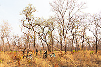 Military policeman and rangers in the early morning on a patrol looking for illegal loggers, in the Phnom Tnout Phnom Pok Wildlife Sanctuary, in northern Cambodia.