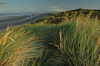 Irvine Beach and dunes looking towards the Dragon Monument, Irvine, Ayrshire<br /> <br /> Copyright www.scottishhorizons.co.uk/Keith Fergus 2011 All Rights Reserved