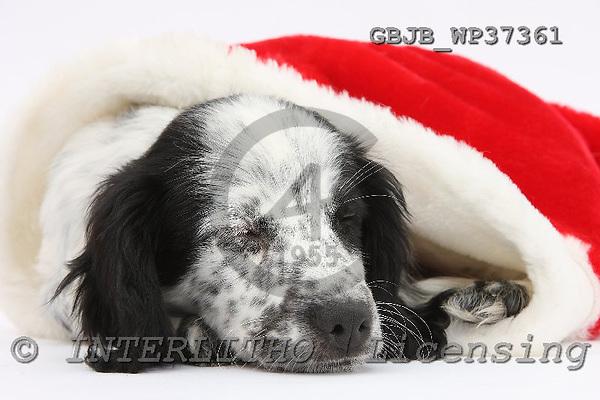 Kim, CHRISTMAS ANIMALS, photos, GBJBWP37361,#XA# stickers