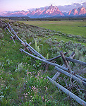 Grand Teton National Park, WY: Sunrise on the Teton Range with weathered fence and spring wildflowers