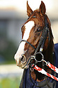 Horse Racing: JBC Classic